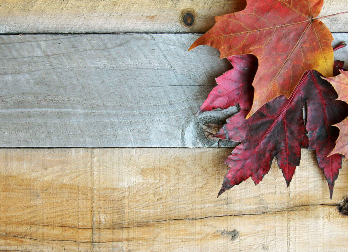 Fall is here! Check out what's new at Zebit.